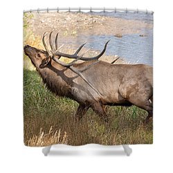 Shower Curtain featuring the photograph Seven Point Elk Bugling by Stephen  Johnson