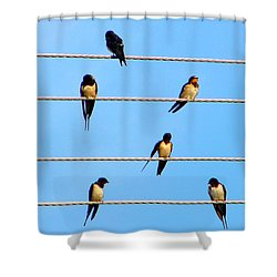 Seven Swallows Shower Curtain by Ana Maria Edulescu