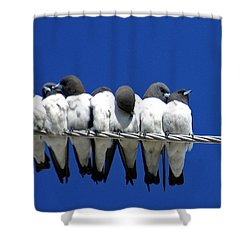 Seven Swallows Sitting Shower Curtain by Holly Kempe