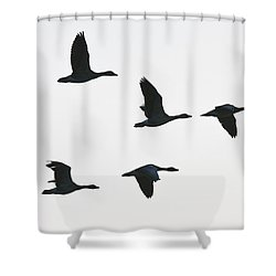 Sevenfold Geese Shower Curtain