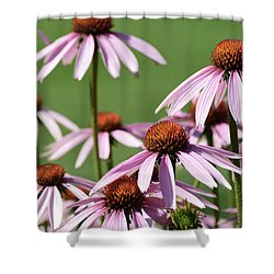 Shower Curtain featuring the photograph Several Echinacea  by Lyle Crump