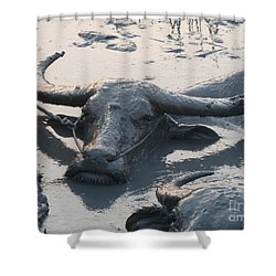 Shower Curtain featuring the photograph Several Water Buffalos Wallowing In A Mud Hole In Asia - Closer by Jason Rosette