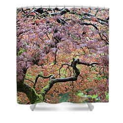 Shower Curtain featuring the photograph Shaded By Beauty by Brandy Little