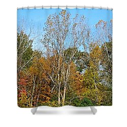 Shades Shower Curtain by Jana E Provenzano