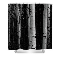 Shower Curtain featuring the photograph Shades Of A Forest by James BO Insogna