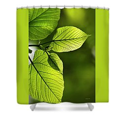 Shades Of Green Shower Curtain by Christina Rollo