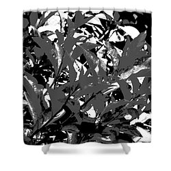 Shower Curtain featuring the photograph Shades Of Grey by Jesse Ciazza