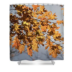 Shadow And Light - Shower Curtain