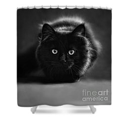 Shadow Cat 2 Shower Curtain