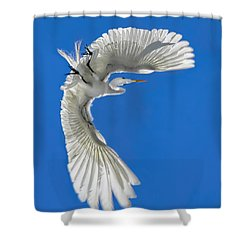 Shadow On A Wing Shower Curtain by Jennie Breeze
