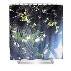 Shower Curtain featuring the photograph Shadow Threads by Megan Dirsa-DuBois