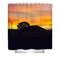 Shadow Tree Shower Curtain by Adam Cornelison