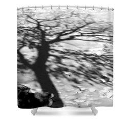 Shadow Tree  Herrick Lake  Naperville Illinois Shower Curtain by Michael Bessler