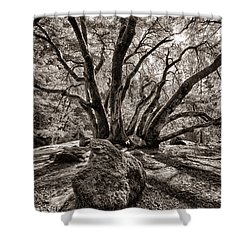 Shadow Tree Shower Curtain