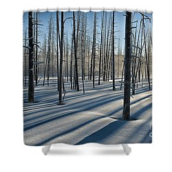 Shadows Of The Forest Shower Curtain by Sandra Bronstein