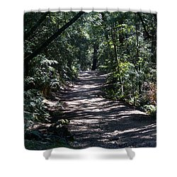 Shady Road On Mt Tamalpais Shower Curtain