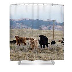 Shaggy-coated Cattle Near Jefferson Shower Curtain
