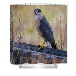 Shakerag Coopers Hawk Shower Curtain by Barbara Bowen