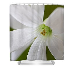 Shamrock Blossom Shower Curtain