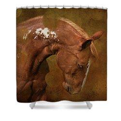 Shane Shower Curtain