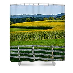 Shapely Cornfield 1 Shower Curtain
