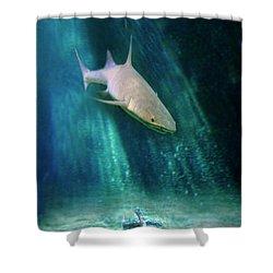 Shark And Anchor Shower Curtain by Jill Battaglia