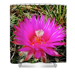 Pincushion Cactus - Coryphantha Vivipara Shower Curtain