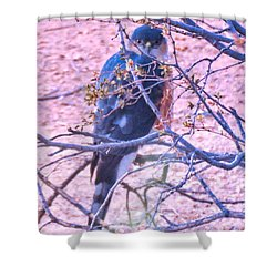 Sharp-shinned Hawk Hunting In The Desert 2 Shower Curtain