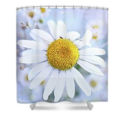 Shower Curtain featuring the photograph Shasta Daisy by Stephanie Frey