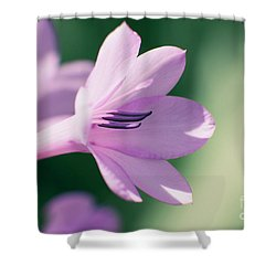 Shower Curtain featuring the photograph She Listens Like Spring by Linda Lees