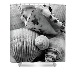 She Sells Seashells Shower Curtain by Julia Wilcox