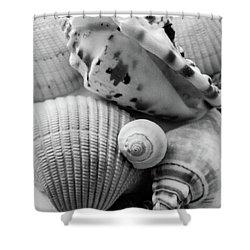 She Sells Seashells Shower Curtain