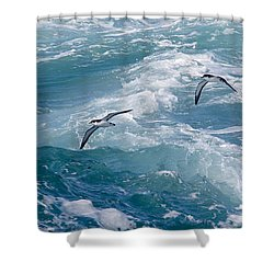 Shearwaters Shower Curtain