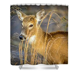 Shed.... Shower Curtain