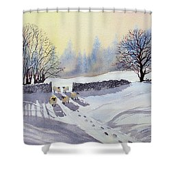 Sheep And Snow Study 2 Shower Curtain