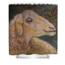 Sheep As Shower Curtain