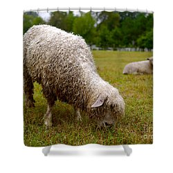 Sheep Begin A New Day Shower Curtain