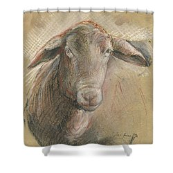 Sheep Head Shower Curtain