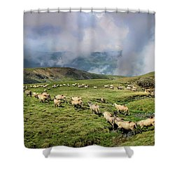 Sheep In Carphatian Mountains Shower Curtain