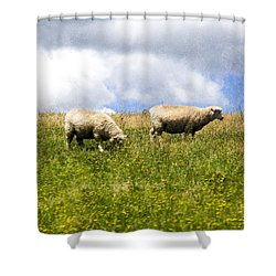Sheep In New Zealand Shower Curtain