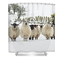 Sheep In Snow Shower Curtain