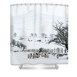 Sheep Shelter  Shower Curtain