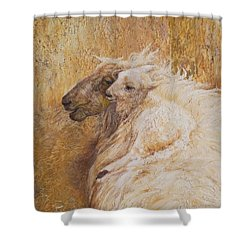 Sheep With A New Born Lamb Shower Curtain