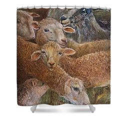 Sheep With Goats Shower Curtain