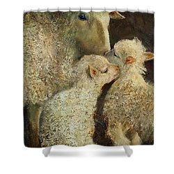 Sheep With Two Lambs Shower Curtain