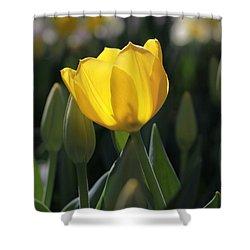 Sheer Yellow Shower Curtain