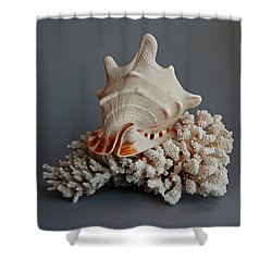 Shell And Coral Shower Curtain