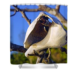 Shell On Brach Of Mangrove Tree At Barefoot Beach In Napes, Fl Shower Curtain
