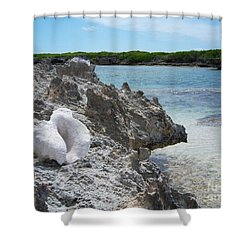 Shell On Dominican Shore Shower Curtain