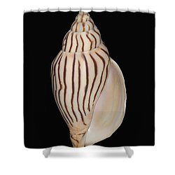 Shell Pattern - Bw Shower Curtain by Bill Brennan - Printscapes